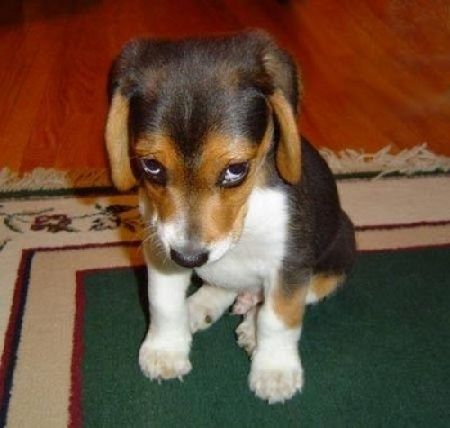 trist-hund-billeder-nb6380