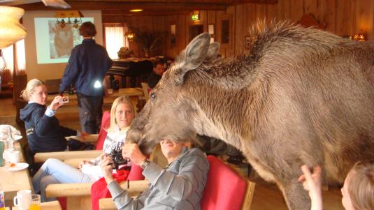 elg i peisestua