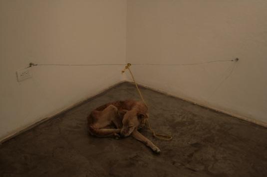 dyreplageri hund