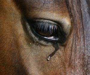 hest 1