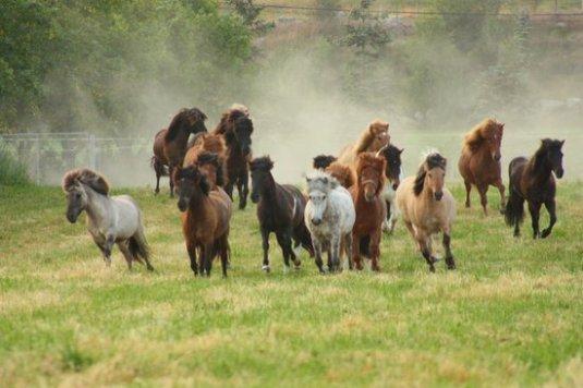 hesteflokk