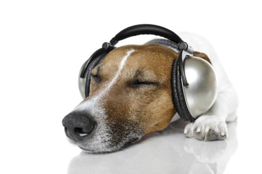 øreklokkerhund