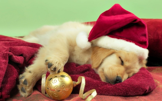 desktop-hd-christmas-puppies-wallpaper.jpg