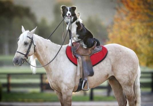 hest-hund.jpg