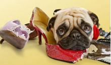 Hund-spist-sko