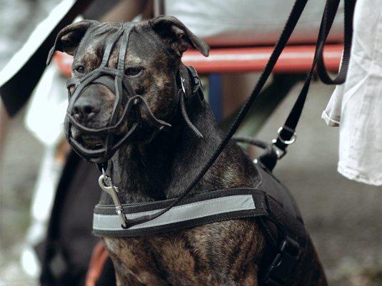 Problemhund-5