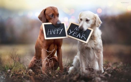 sylwester__nowy_rok__new_year_1920x1200_130_psy__happy_new_year