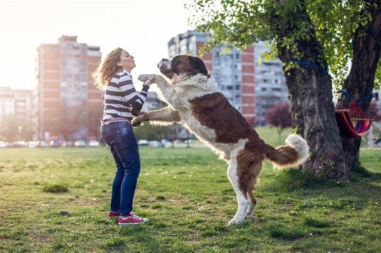 dog-standing-812494972-5aff34fa8e1b6e00360b19e7
