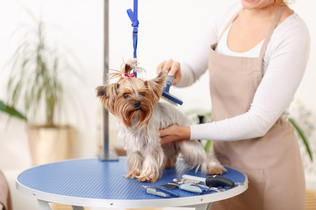 Dog-Being-Brushed-on-Grooming-Table-by-Professional-Groomer